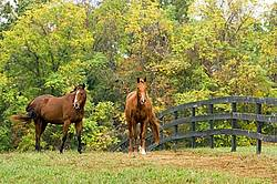 Two horses outside in paddock