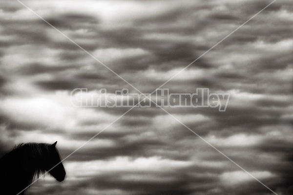 Horse against big sky background
