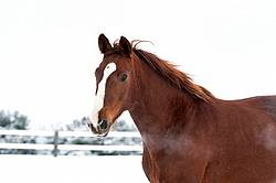 Portrait of a horse in the winter