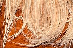 Horses mane with witches knot