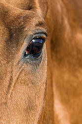 Close-up photo of a horse eyeball