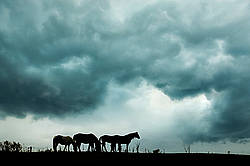 Horses silhouetted against dramatic sky and clouds
