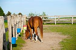 quarter horse in paddock