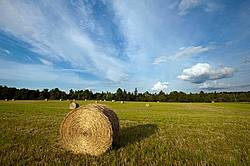 Photo of round bales of hay sitting in field