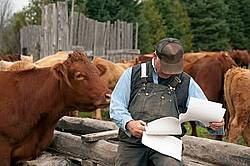 Farmer sitting on feeder in cattle yard
