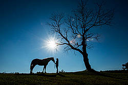 Woman and a horse silhouetted under a tree