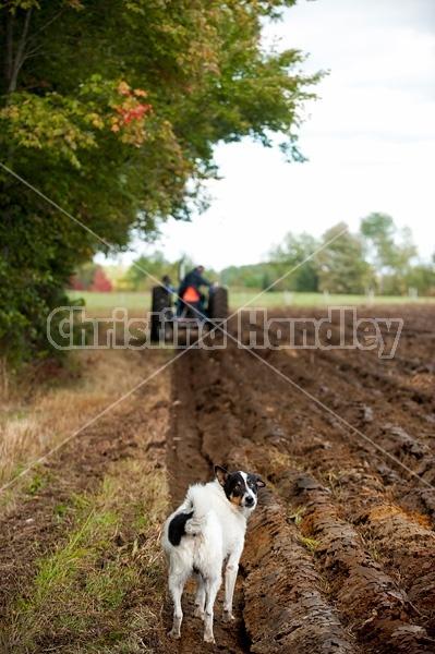 Farmer plowing a field