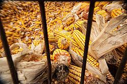 Corn crib full of corn