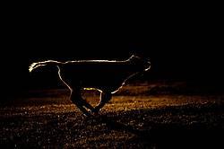 Running Calf