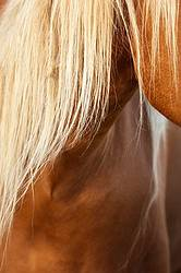 Closeup photo of horse body