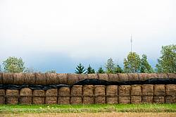 Round bales of hay stock piled for winter feed storage