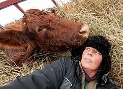 Self Portrait With Cow