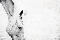 Horse face with texture background