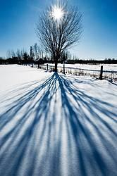 Starburst Tree Shadow