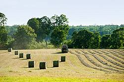 Round bales of hay sitting in field. Farmer round baling remaining hay in the background