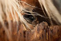 Close-up photo of a horses eye over stall door
