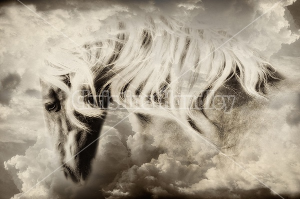 Photo of a belgian draft horse in the clouds