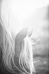 Close-up of horse in the setting sun
