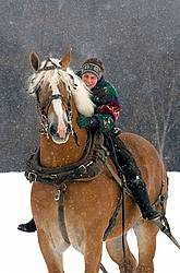 Woman Riding Belgian Stallion