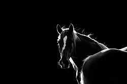 Horses in black and white backlit by the setting sun