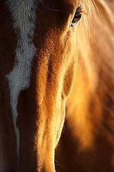 Closeup photo of horse face