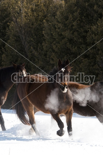 Horses outside in the snow