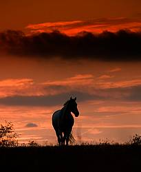 Horse silhouette against bright red evening sky