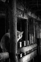 Barn cat sitting on top of cattle manger