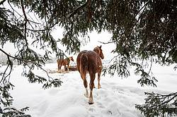 Horse standing in snow under trees