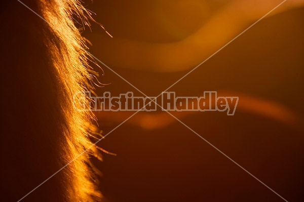 Abstract horse photo