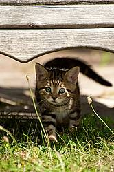 Young baby kitten in garden