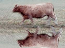 Cow walking by photographed with a slow shutter speed to imply motion
