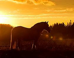 Backlit silhouette of horse in pasture