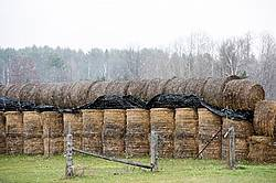 Round bales of hay piled and stored for winter feeding