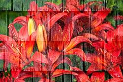 Multiple exposure of red lillies on wooden shingle wall