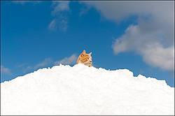 Orange cat sitting on snow
