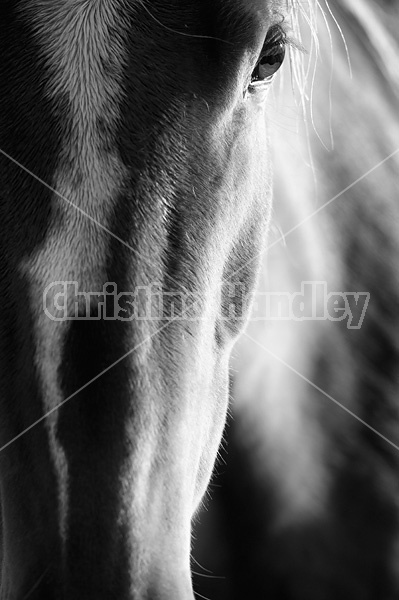 Closeup photo of horse face