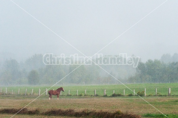 Horse standing in a heavy rainstorm