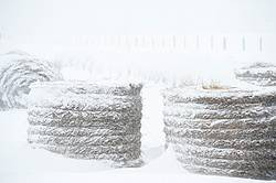 Round bales of hay outside covered in snow