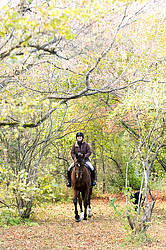 Woman horseback riding under a canopy of trees