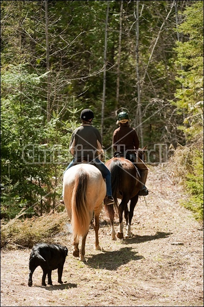Riding Rocky Mountain Horses