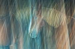 Abstract movement photos of horses