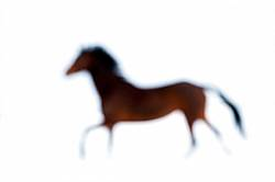 Abstract bay horse galloping in the snow