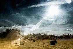 Photo of round bales of hay in hay field