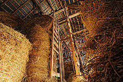 Looking up at the view inside an old barns hayloft