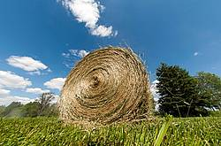Round bale of hay sitting in field