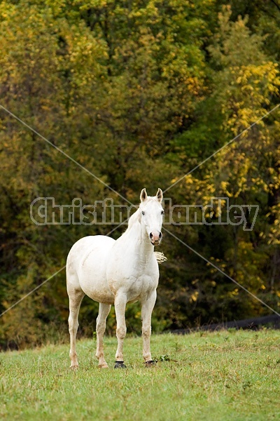 Horse on autumn pasture