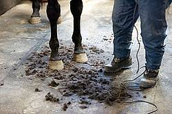 Photo of horse standing in hair clippings