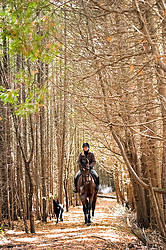 Woman horseback riding through a cedar forest in the autumn time