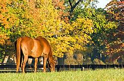 Chestnut horse grazing on autumn pasture